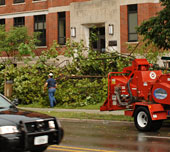 Workers clean up downed tree