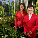Researchers Wurtele and Ling standing among corn plants