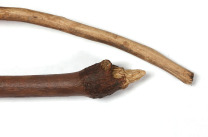 Hunting tools or spears chimps use to hunt