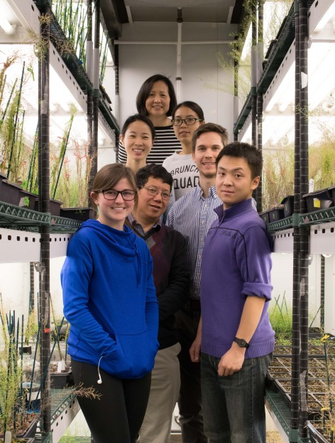 Yanhai Yin and members of his laboratory in an ISU greenhouse