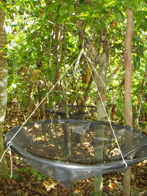 A seed trap set up in a forest to collect and track seed dispersal.