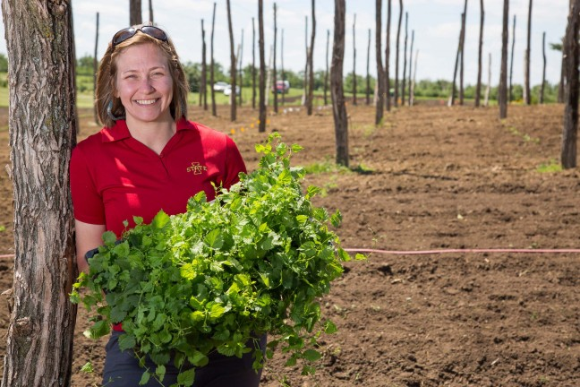 Diana Cochran stands in the hop yard at the ISU Horticulture Research Station