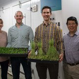 Four ISU plant sciences researchers in a greenhouse
