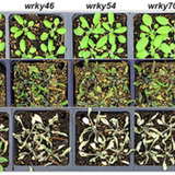 trials of arabidopsis plants