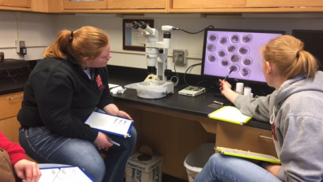 Two veterinary students use laboratory equipment to identify embryos