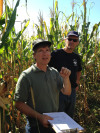 Two researchers inspect a corn nursery outside Ames, Iowa