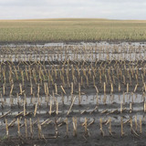 An Iowa farm field under soggy conditions
