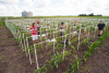 Students set up digital cameras in a corn field to record time-lapse data of plant growth