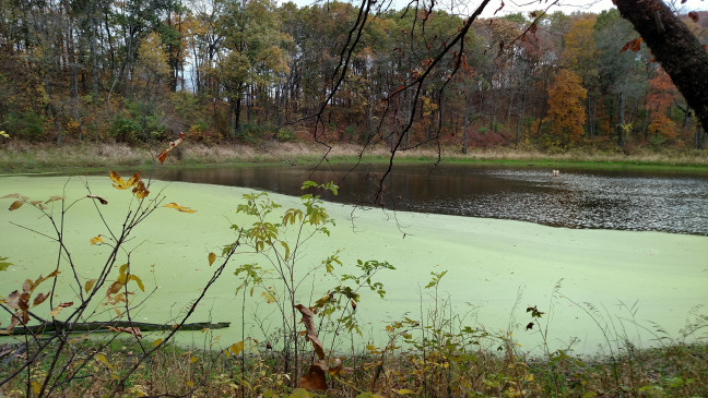 Iowa lake with an algal bloom