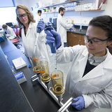 Graduate students work in an agricultural and biosystems engineering lab