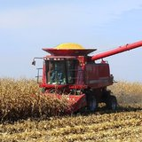 A combine harvests corn in a farm field