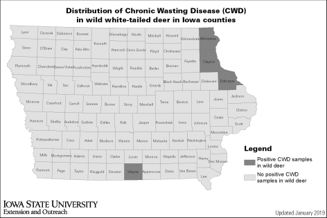 A map of Iowa showing the four counties where chronic wasting diseases has been confirmed