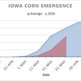 A graph noting the gap between 2019 corn emergence in Iowa and an average year.