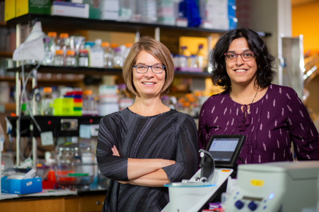 Amy Andreotti and Dipali Sashital study structural biology.