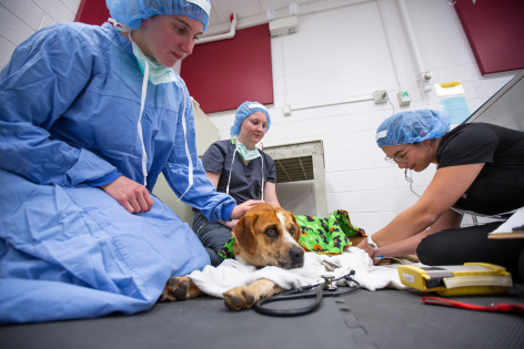 Vet students treating shelter animals