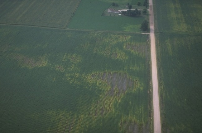 Aerial image of soybean field suffering from nematode damage