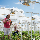 Students set up hundreds of cameras to record time-lapse data of crop growth,.