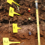 A cross section of labelled soil taken from an experimental site