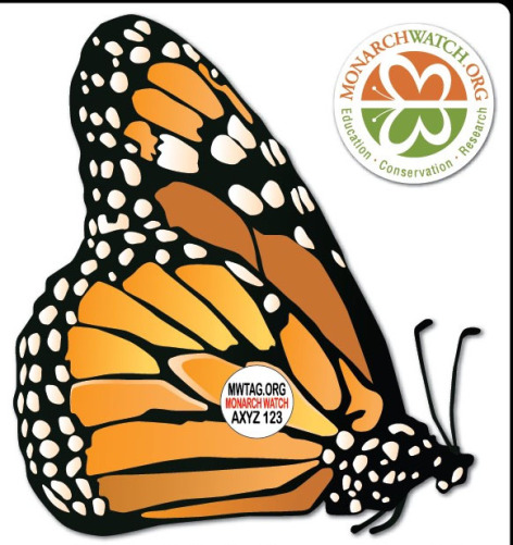 monarch butterfly tag
