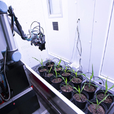 A robot tends to plants in a campus laboratory