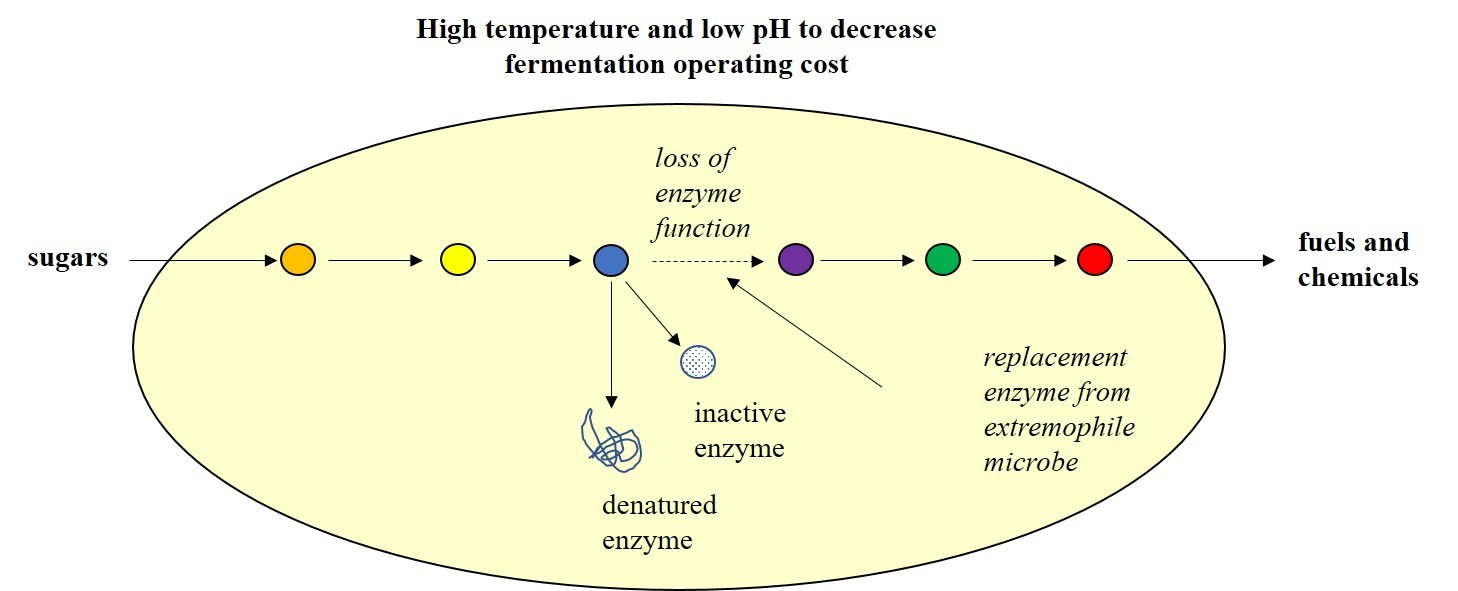 An illustration showing how researchers will substitute hardier enzymes to improve bioproduction of fuels and chemicals.